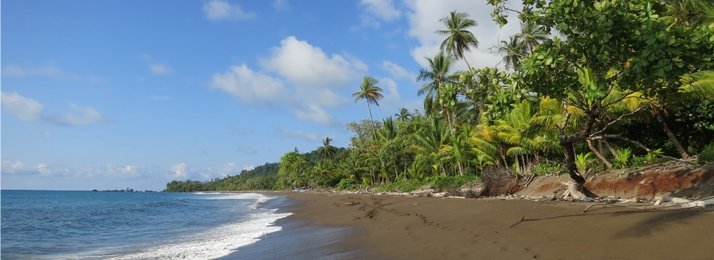 the beach of the Osa Peninsula in southwestern Costa Rica framed by green palm trees