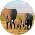 Elephants on Kenya Safari Adventure