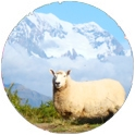 New Zealand hiking adventure
