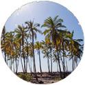 Hike the Big Island of Hawaii