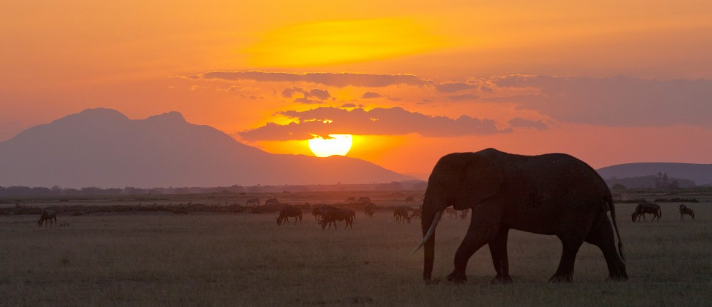 elephants walking the savanna of Tanzania at dusk