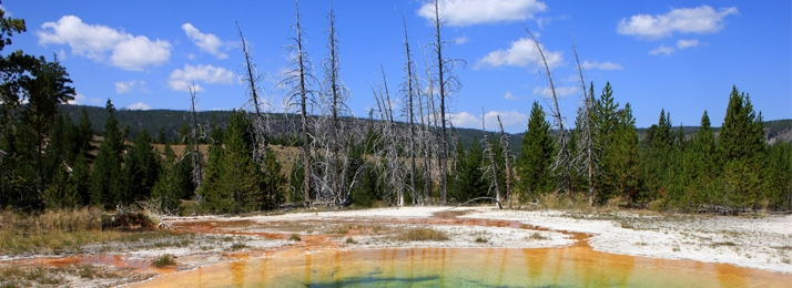 The Morning Glory Pool in Yellowstone National Park is one of many hot springs viewable throughout the park