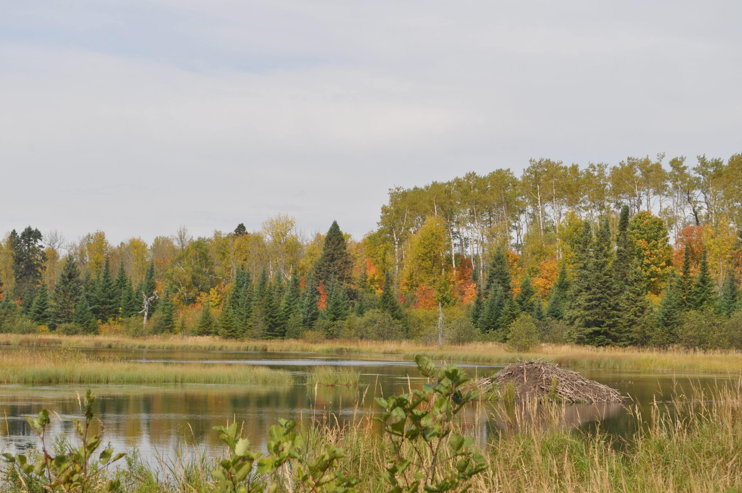 Fall colors changing across a Northern Minnesota Lake