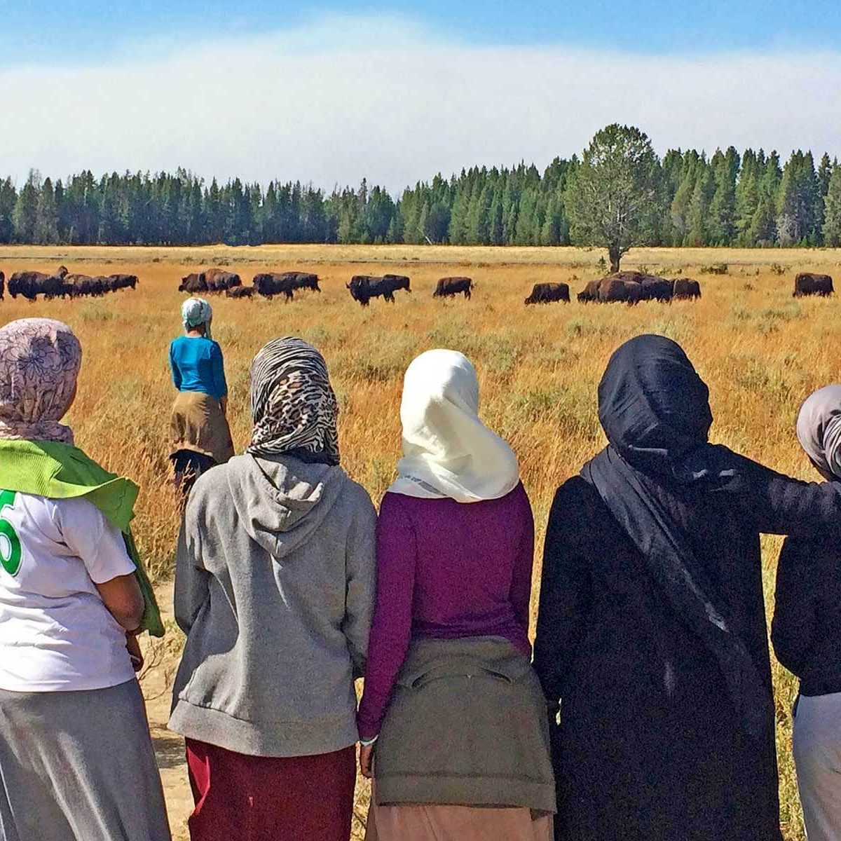 Looking out on bison at Yellowstone